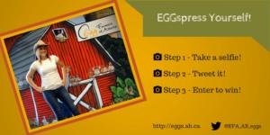 Stampede_Blog-contest