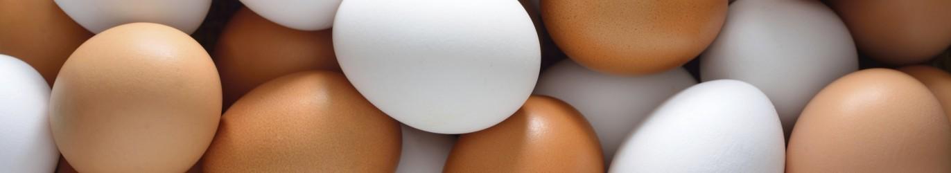 Eggs1-1372x250