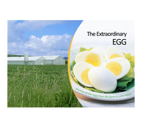 Extraordinary_Egg_7-12